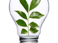 GreenBulb.jpg